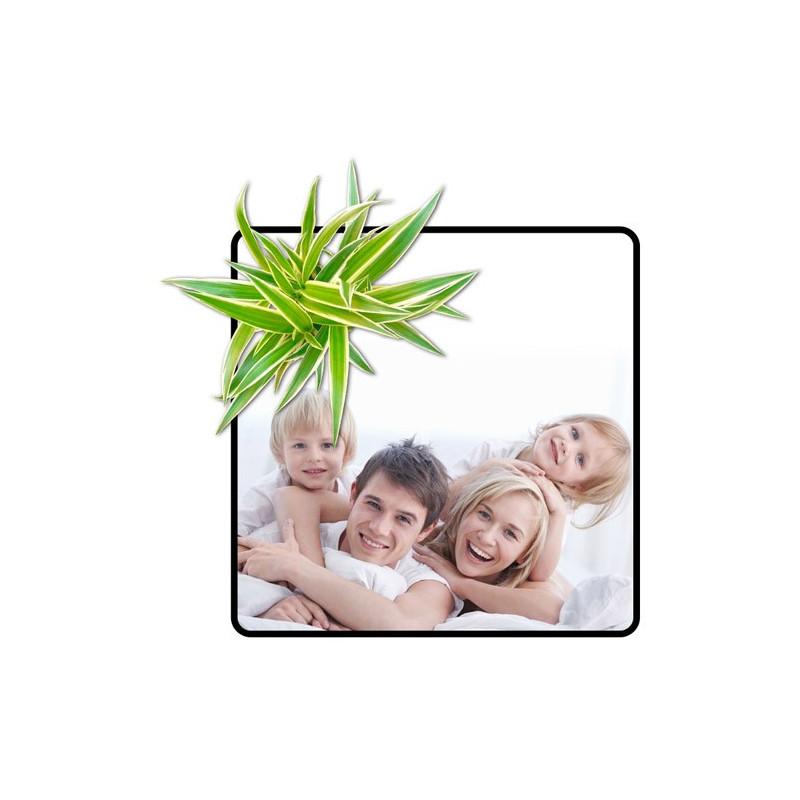 Tableau végétal avec photo